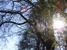 Eilenriede mit Sonnenschein